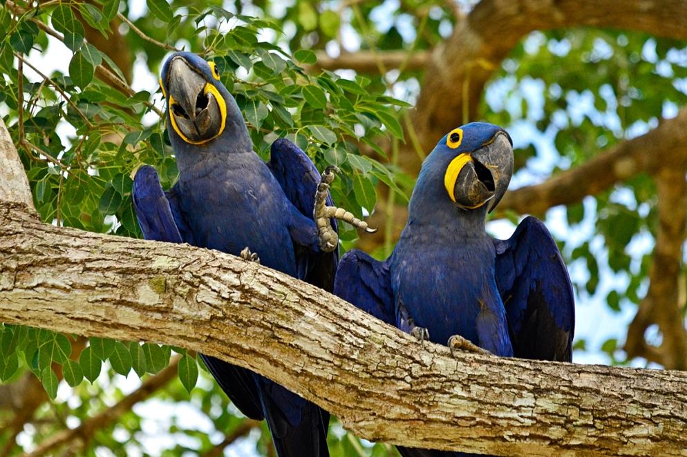 wild pantanal